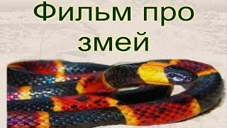 Мой фильм про змей