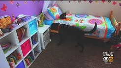 Westmoreland Co. Housing Authority To Use Dogs To Sniff Out Bed Bugs