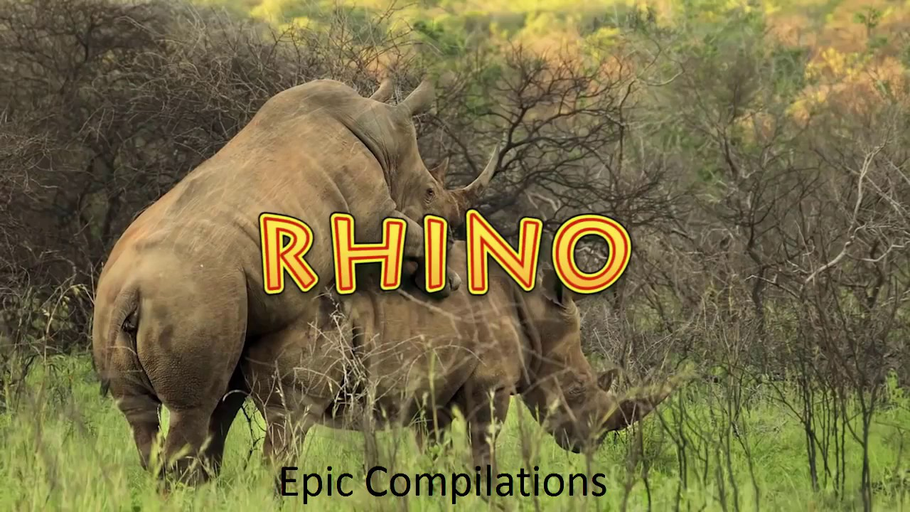 Animals Mating and Giving Birth Compilation Elephant Rhino Seal Camel and more