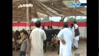 Rabwah Ke Shab-o-Roz (Eid-ul-Adha 2011)
