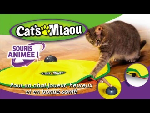 cat 39 s miaou tapis anim pour chats best of tv youtube. Black Bedroom Furniture Sets. Home Design Ideas