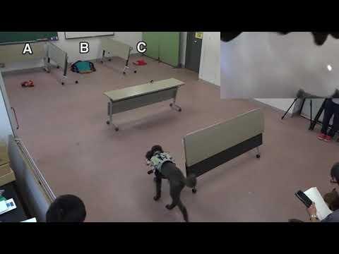 Canine motion control using spot light sources (Long version)