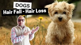 Hair Loss - Hair Fall Problems Dogs - Bhola Shola