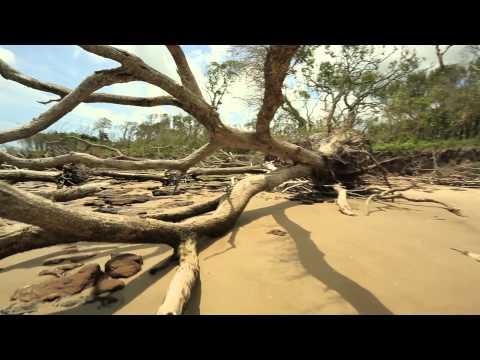 Big Talbot Island Park Florida Blackrock Beach