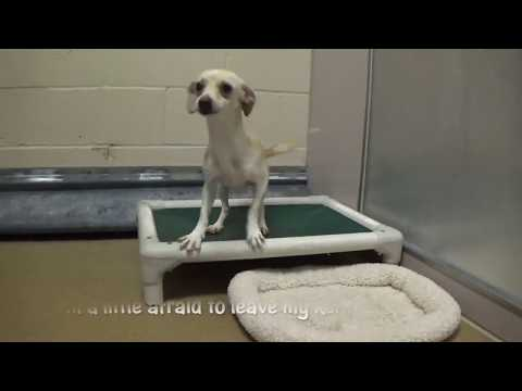 Please Help Save Bittles! Just 1 Yr. Old!