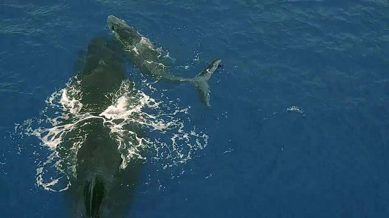 Nature : Baleine et son baleineau