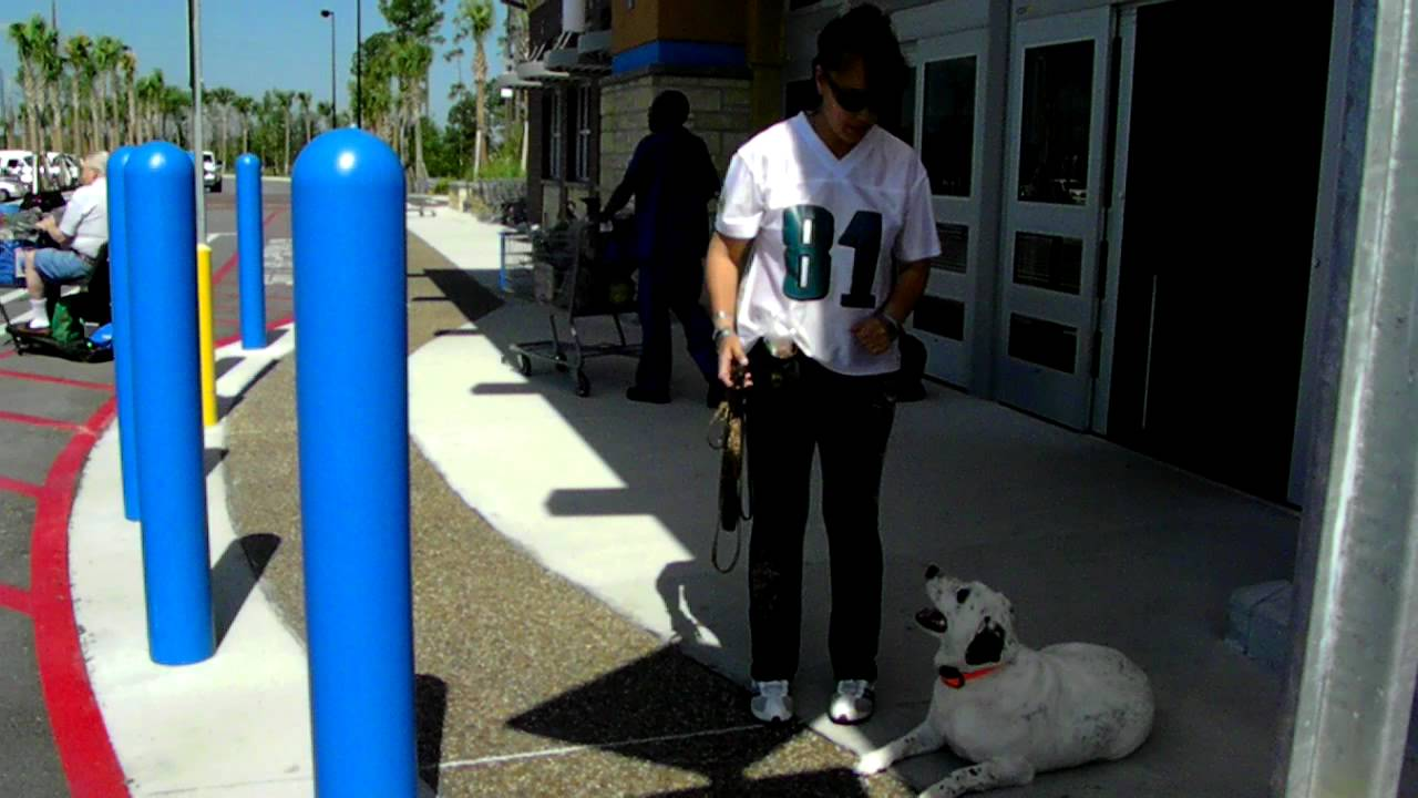 Deaf Dog Training Tips Off Leash Dogtra Pager E Collar Youtube