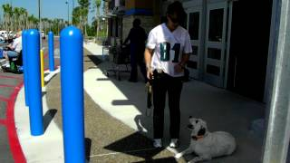 Deaf Dog Training Tips Off Leash Dogtra Pager E Collar