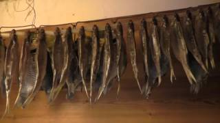 Маленькие хитрости для вяления рыбы