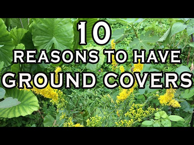 10 Reasons To Establish Ground Covers - INCREDIBLE Ground Cover Ideas for Lazy Gardeners