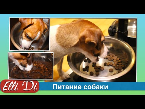 A puppy or dog will not eat dry food? Nutrition puppy with Elli Di. Dry food for dogs.