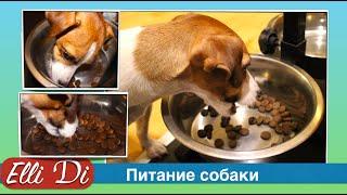 Щенок или собака не ест сухой корм? Питание щенка с Elli Di. Кушаем сухой корм для собак.(Видео про питание собаки. Почему щенок не ест корм для собак? Кормление щенка. ▽ Я в соц сетях ▽ П О Д П И..., 2016-01-11T16:45:14.000Z)