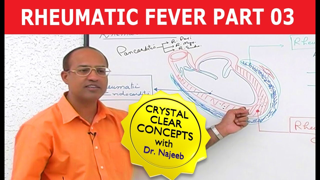Excelente Vídeos De Anatomía Del Dr. Najeeb Bosquejo - Anatomía de ...