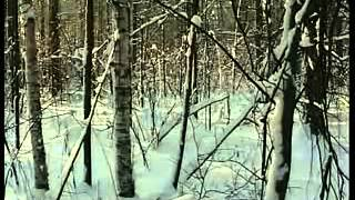 Mystery of Dyatlov's Pass part 1