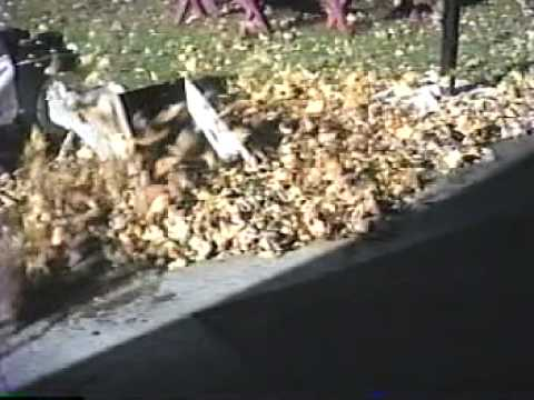 1990 Lake, Cement, Garage, Thanksgiving, Katie & Nate & Nutcracker, Christmas
