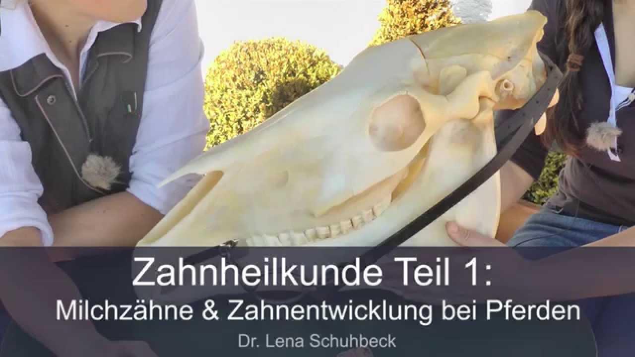 Milchzähne & Zahnentwicklung bei Pferden | Lena Schuhbeck - YouTube