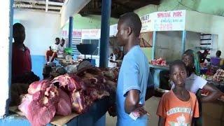 Production animale/belier: tournée nationale des producteurs de bovins de Côte d'Ivoire