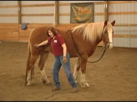 Horse Training Equipment |Horse Training