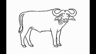 """How to draw """"African buffalo full body"""" pencil drawing step by step"""