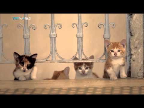 Kedi: A documentary about Istanbul's cats