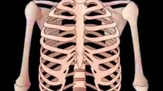 Skeletal System & Bone anatomy   physiology