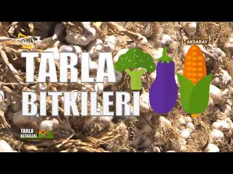 Sarımsakta Toprak Hazırlığı - Tarla Bitkileri / Çiftçi TV