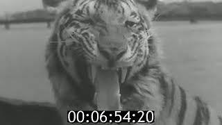 Съёмка кинофильма «Полосатый рейс» 1960 год