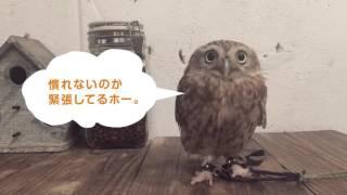 大阪・中崎町『フクロウコーヒー』のシェフ兼バリスタの大東さんにご出...