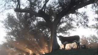 LOS TRES AMARRADORES. LOS CERVANTES DE SINALOA DE LEYVA