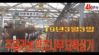 귀촌 주말농장 약초나무/거봉포도/머루포도/벌나무/헛개나…