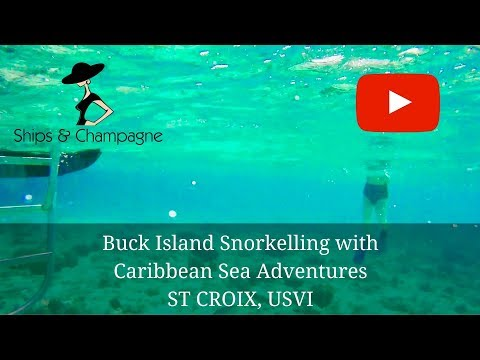 St Croix Snorkelling At Buck Island With Caribbean Sea Adventures