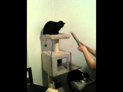 Funny scared cat jumping in the air - YouTube