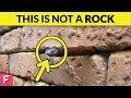 ONLY 1 OUT OF 1000 CAN SEE WHAT'S EXACTLY INSIDE THE WALL | TOP 10 OPTICAL ILLUSIONS EVER!