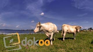 Otto und seine Rinder | Doku
