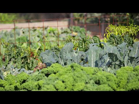 Bellarine Life - Basil's Farm