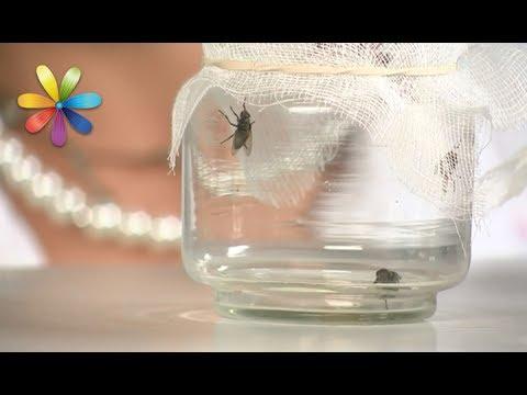 Как избавиться от мух без химических спреев и мухобойки? – Все буде добре. Выпуск 1042 от 27.06.17