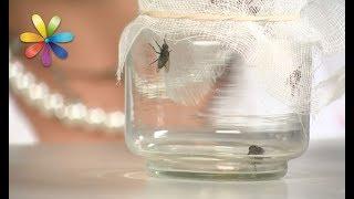 видео Как избавиться от мух в квартире и на даче