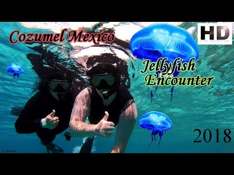Cozumel Mexico Snorkeling | Jellyfish Encounter| 2018 |