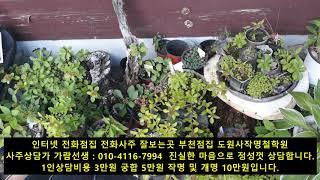 인터넷 전화사주 전화운세 잘보는곳 부천점집 도원사철학관