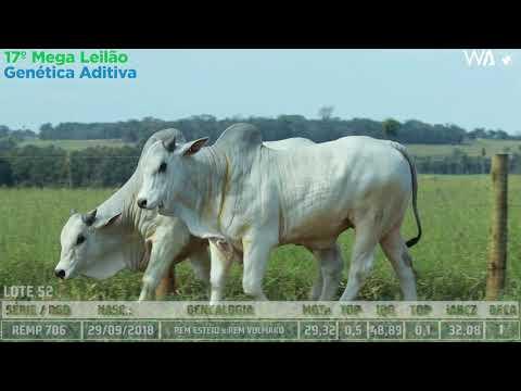 LOTE 52 - DUPLO -  REM 10049, REMP 706 - 17º Mega Leilão Genética Aditiva 2020