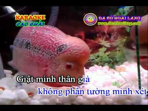 dacohopailang.com - karaoke: Vọng kim lang 2.avi
