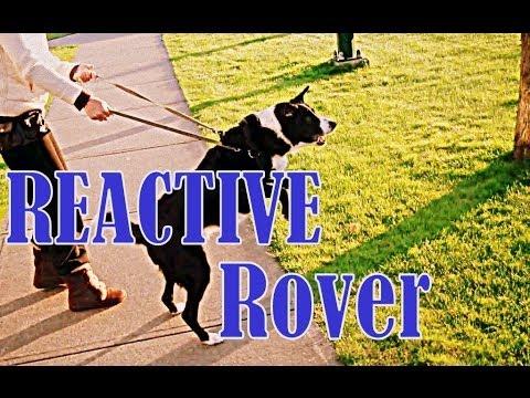 Reactive Rover- How to eliminate embarrassing behaviour