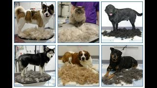 Разные типы шерсти у собак. Плюсы и минусы.