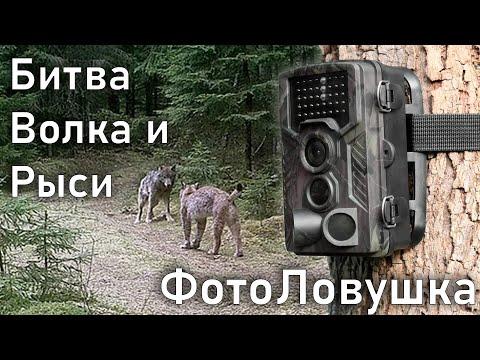 Преступления и Приколы, снятые на камеры Видеонаблюдения в Беларуси