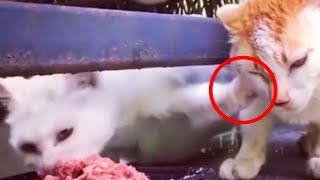 Funny Cats Who Does Not Want To Share Their Food  Cats With Food [Funny Pets]