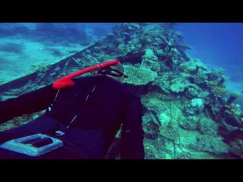 apo reef shipwreck freedive
