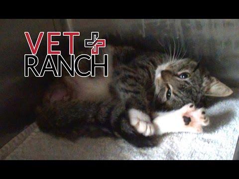 Pitiful Kitten Needs Emergency Care