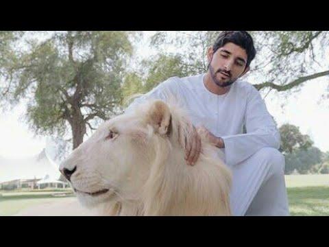 Amazing pets Sheikh Hamdan Bin Rashid Al Makhtoum