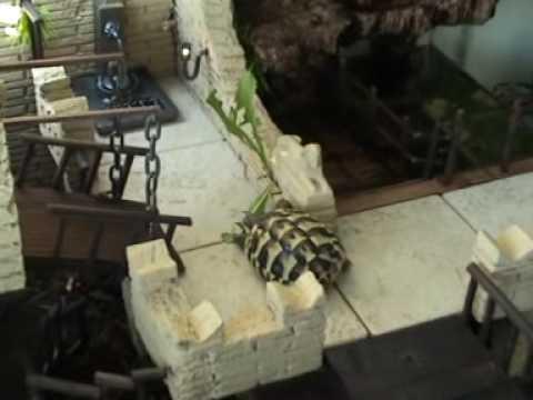 Tartapark l 39 oasi delle tartarughe youtube for Terrario per tartarughe acquatiche