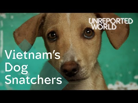 stealing-pet-dogs-for-meat-in-vietnam-|-unreported-world